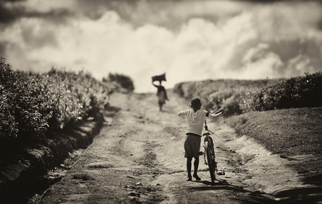 Chemin de la plantation_LN
