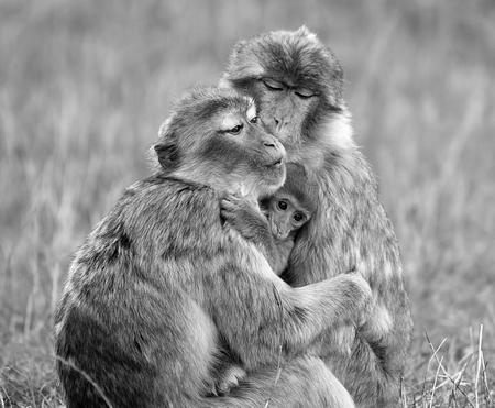 Famille macaque 2ème_LN